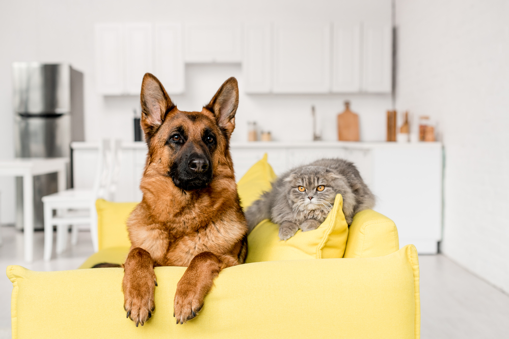 Appreciate Your Pet This Month At These Local Businesses