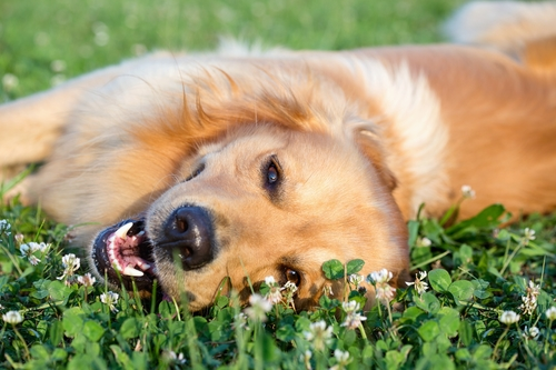 Surviving the Dog Days of Summer With Your Four Legged Friend