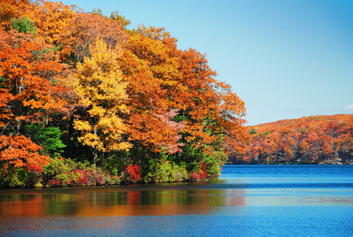 Best Spots for Fall Foliage Viewing Around Ronkonkoma