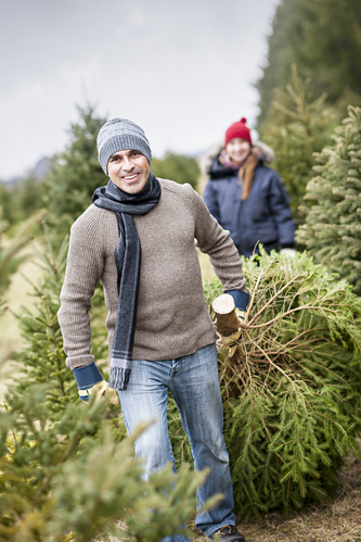 Cut Down Your Own Tree at These Local Farms